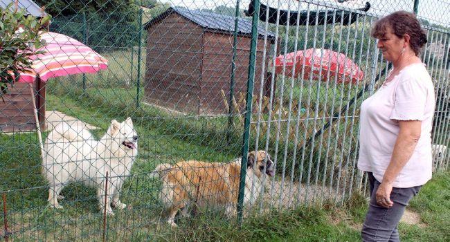 refuge chien lot et garonne