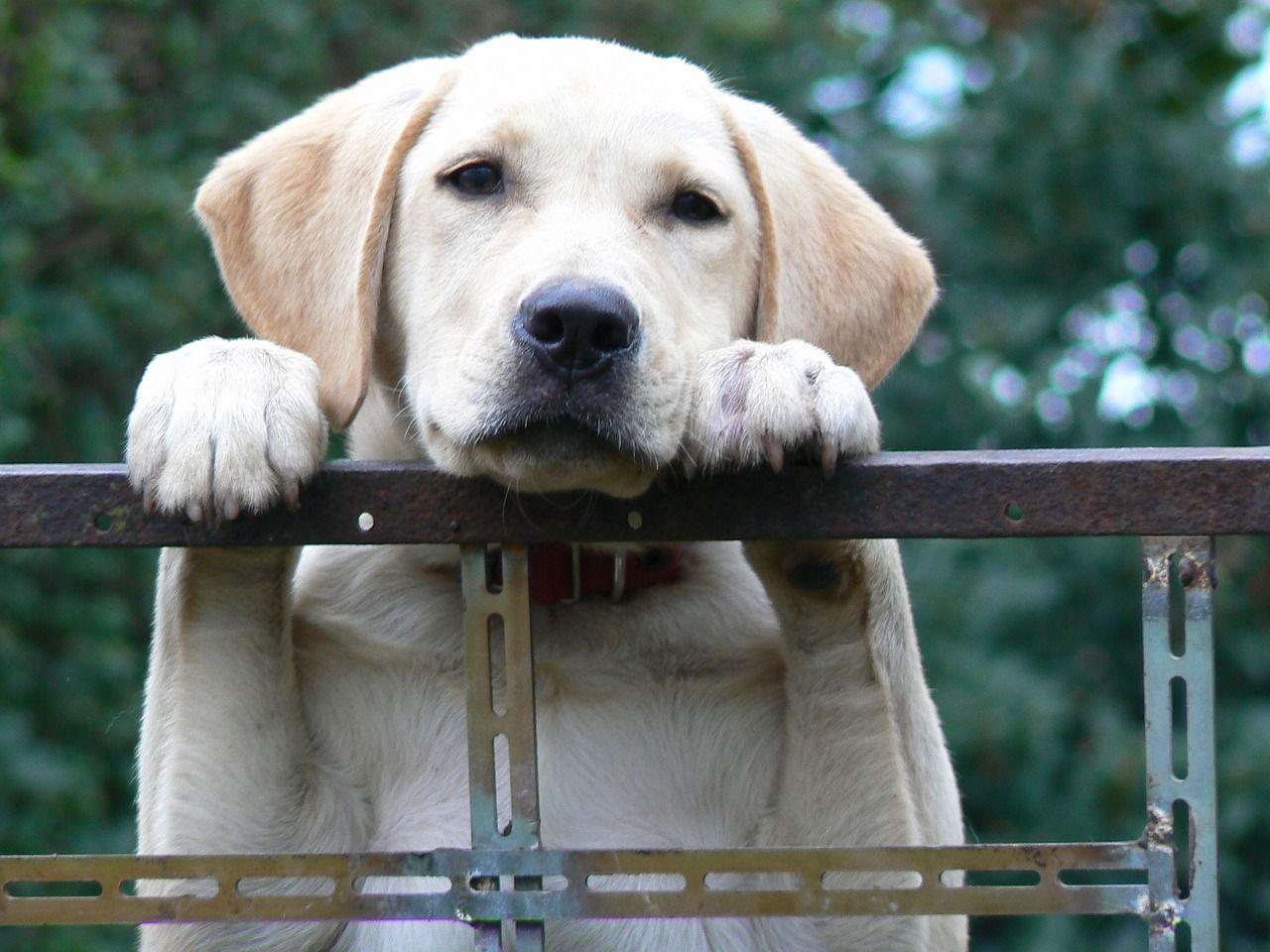 refuge chien marne