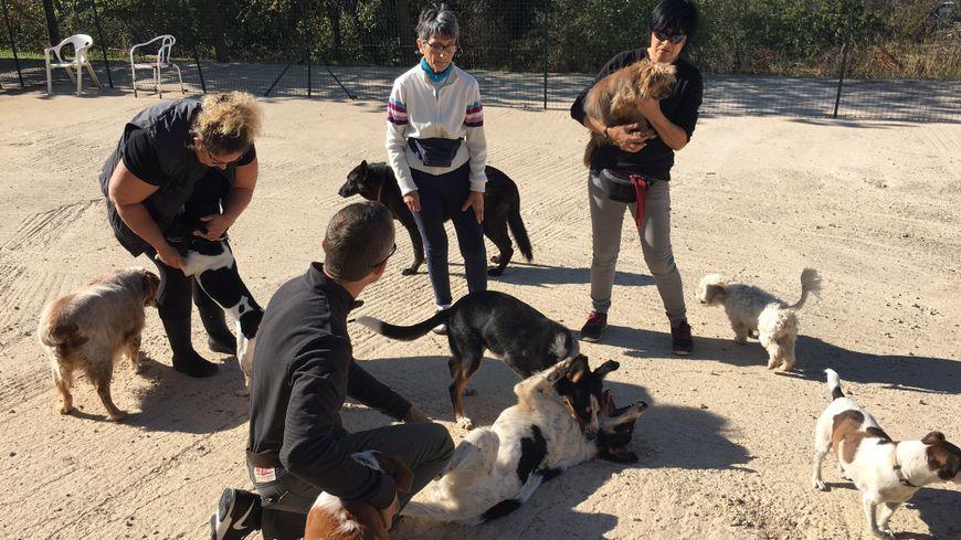 refuge chien marseille