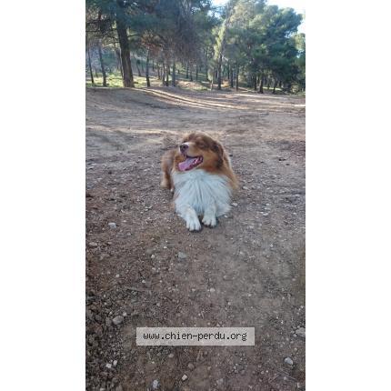 refuge chien martigues