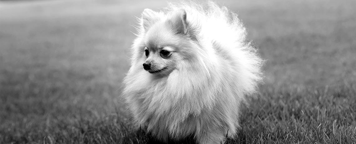 refuge chien mayenne