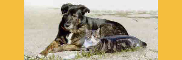 refuge chien monein
