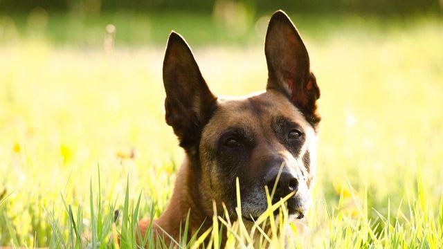 refuge chien montpellier