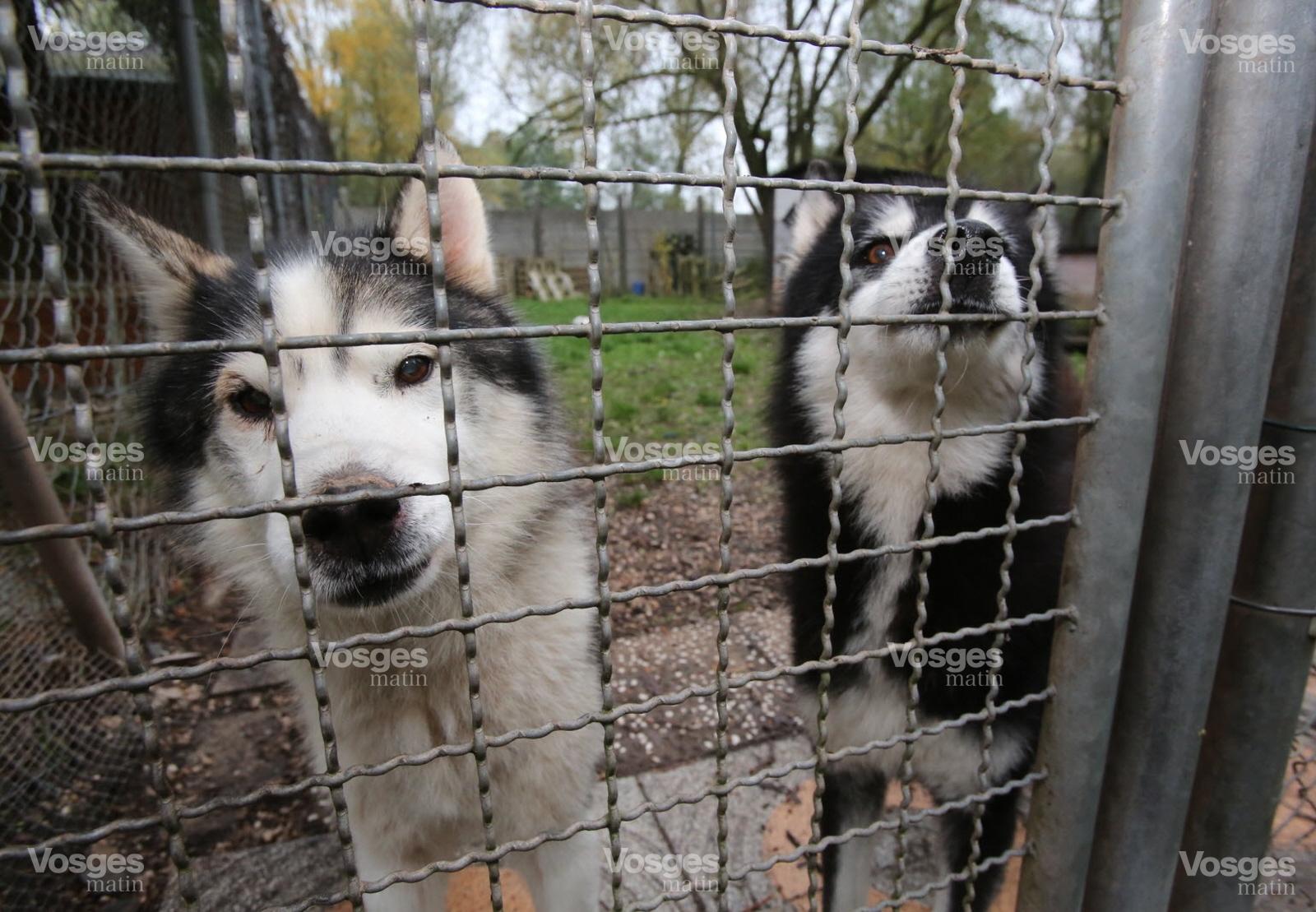 refuge chien moselle