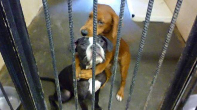 refuge chien namur