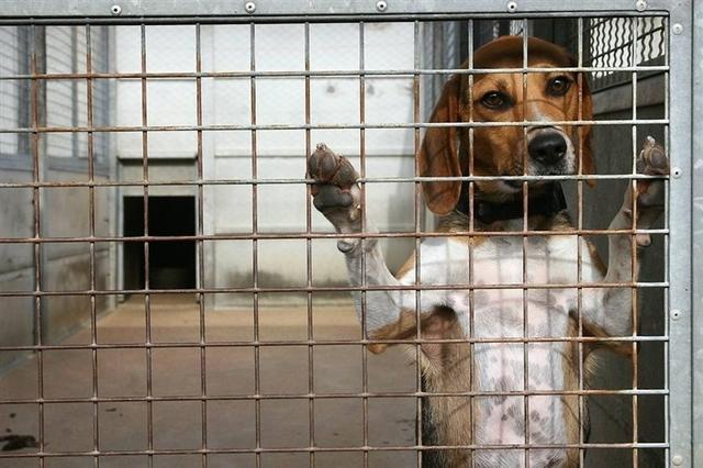 refuge chien nantes