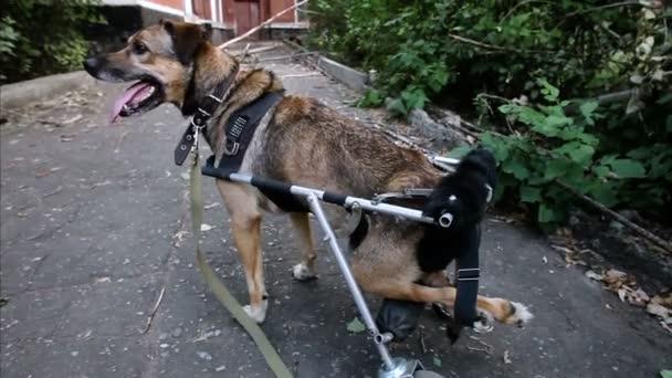 refuge chien nice
