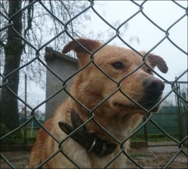 refuge chien nievre