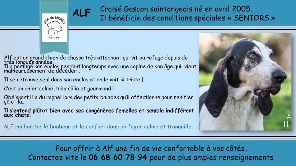 refuge chien nimes