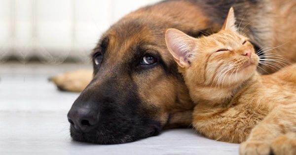 refuge chien niort