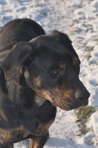 refuge chien normandie