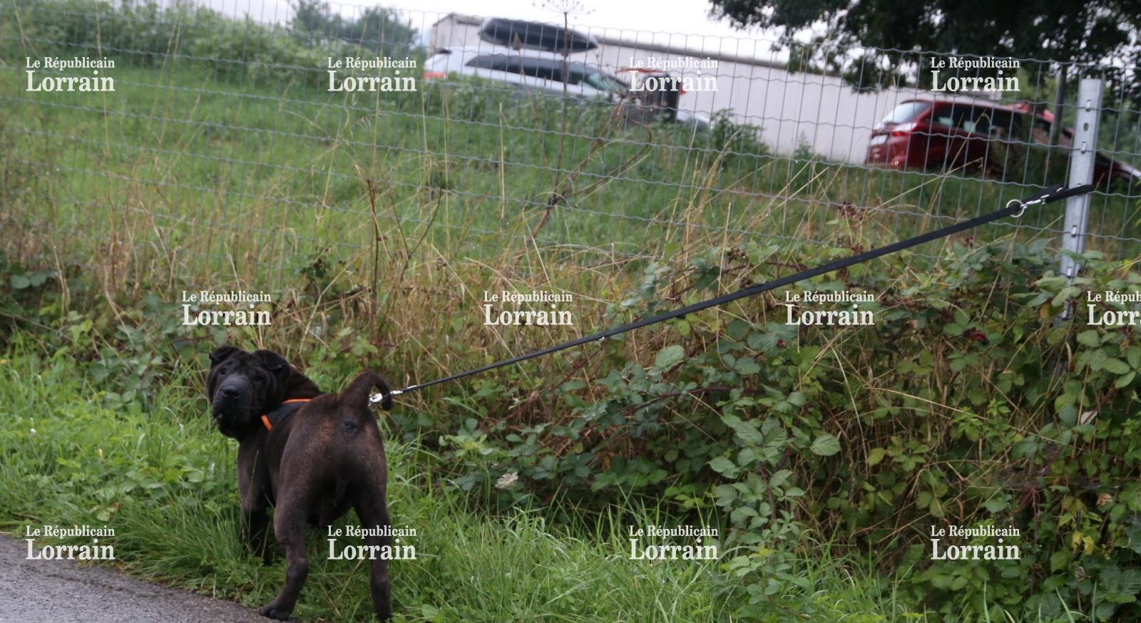 refuge chien oeutrange