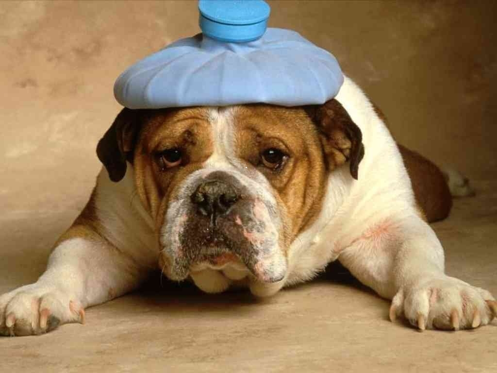 refuge chien oise