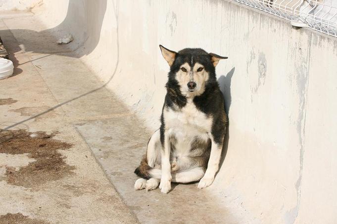 refuge chien ormes