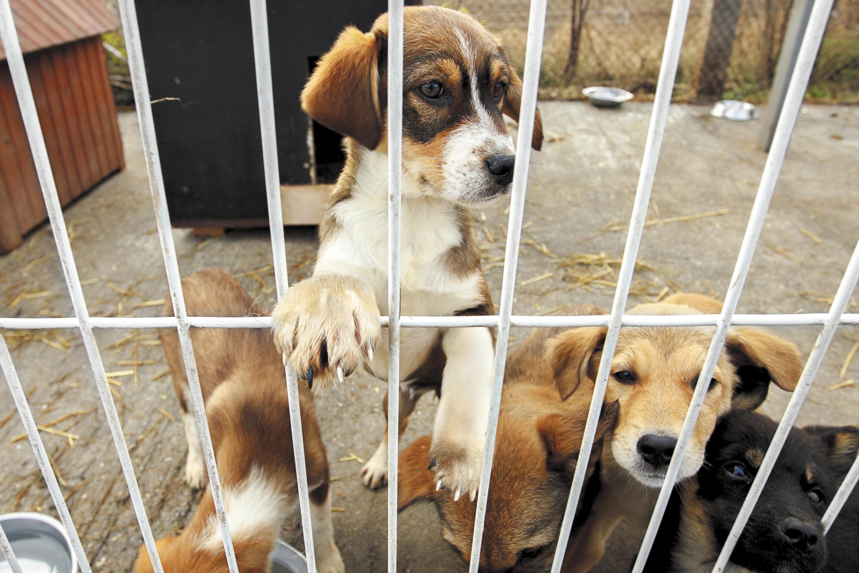 refuge chien paca