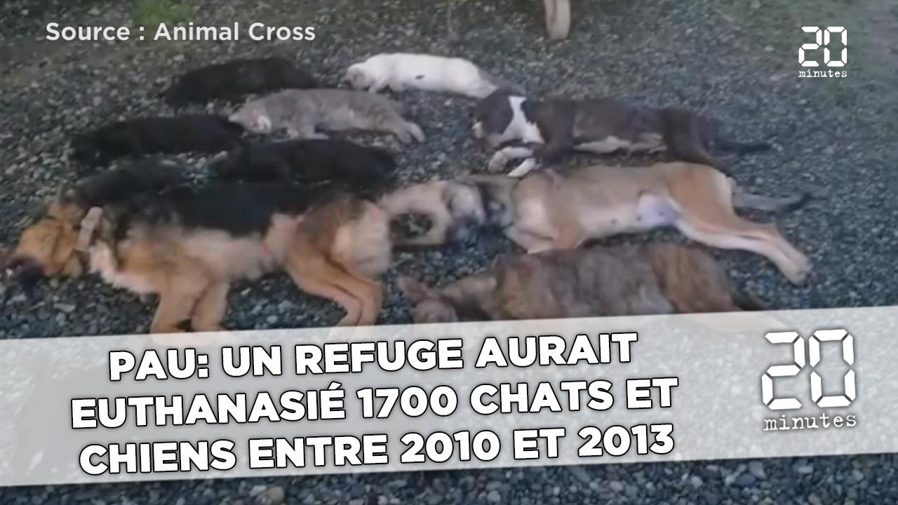 refuge chien pau