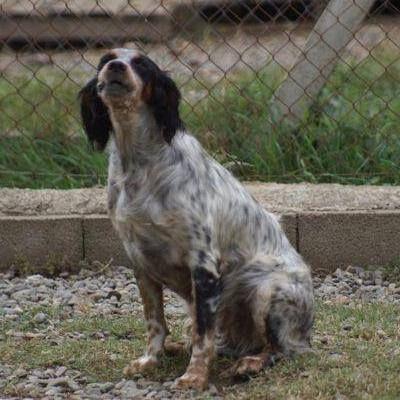 refuge chien pecquencourt