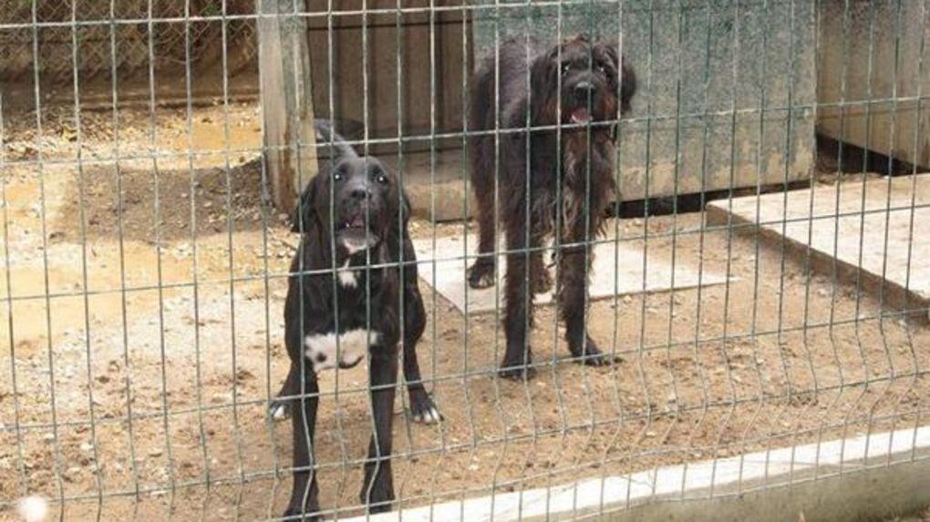 refuge chien poitiers