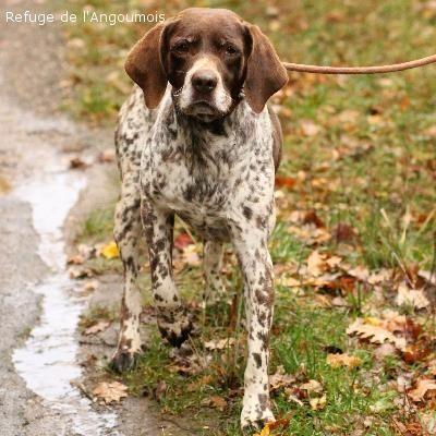 refuge chien poitou charente