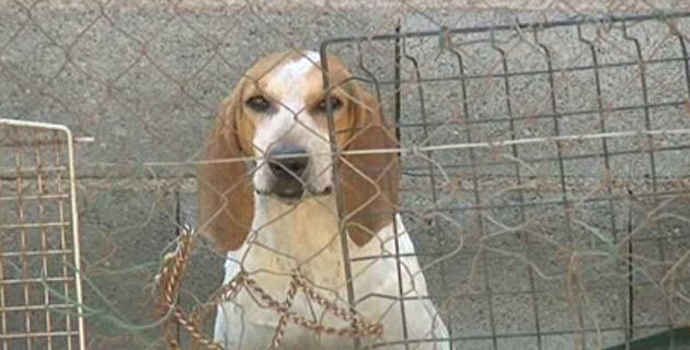 refuge chien porto vecchio