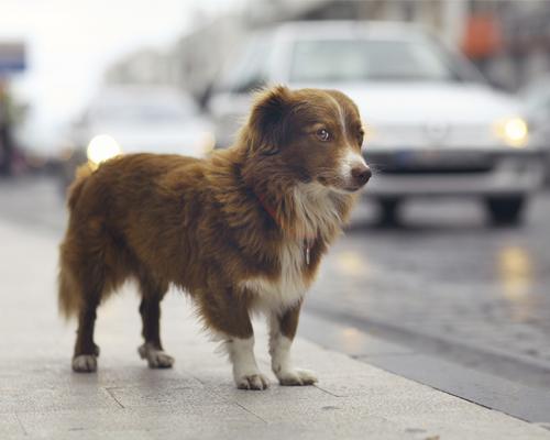 refuge chien quaregnon