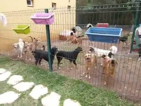 refuge chien reunion
