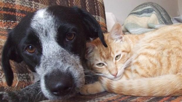 refuge chien rimouski