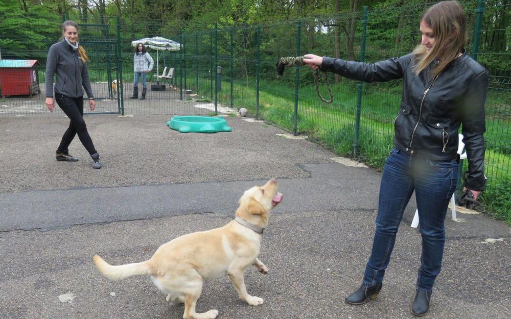 refuge chien ris orangis