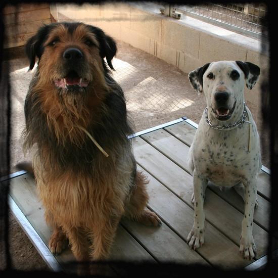 refuge chien rocbaron
