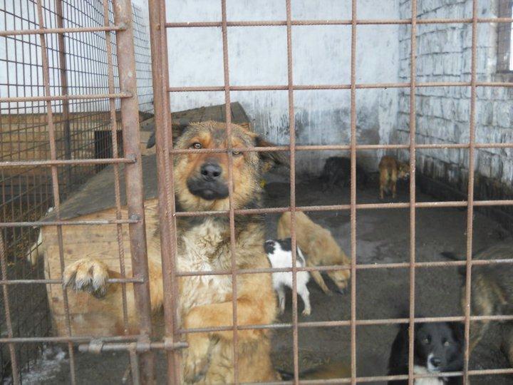refuge chien roumanie