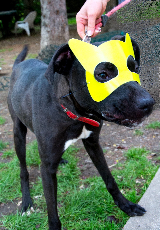 refuge chien saint etienne