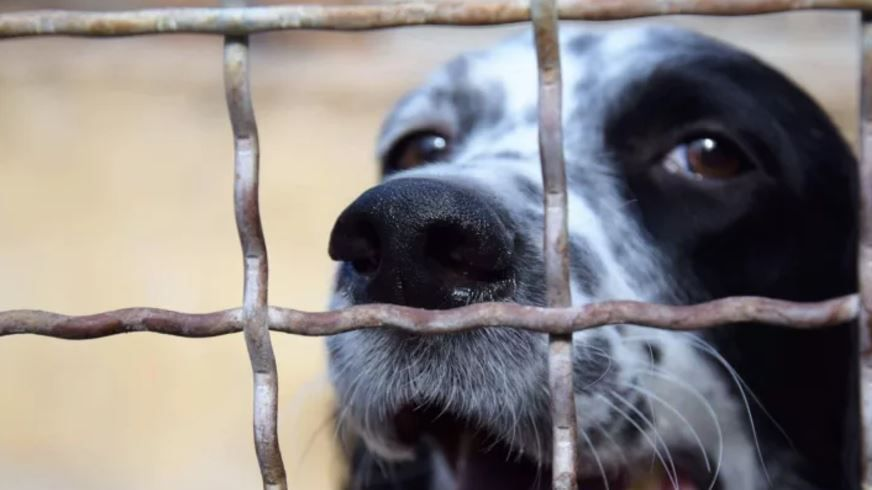 refuge chien saint raphael