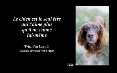 refuge chien saint vallier