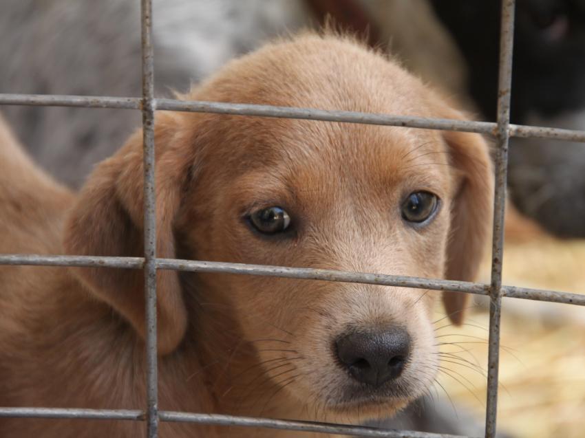refuge chien somme