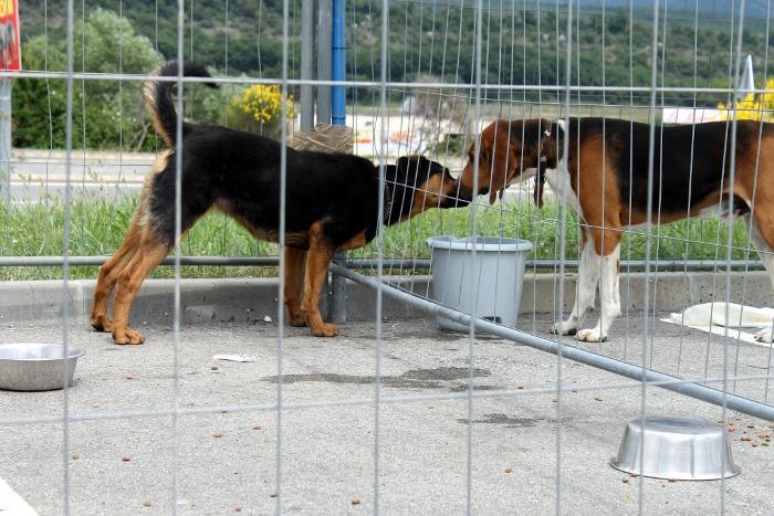 refuge chien spa sisteron