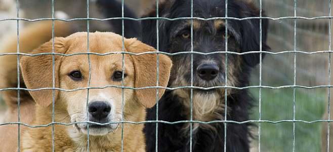refuge chien tours