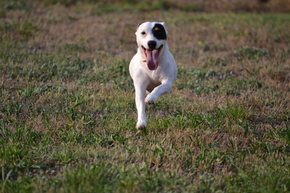 refuge chien trets