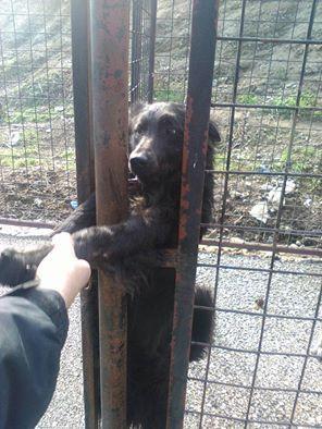 refuge chien val d'oise
