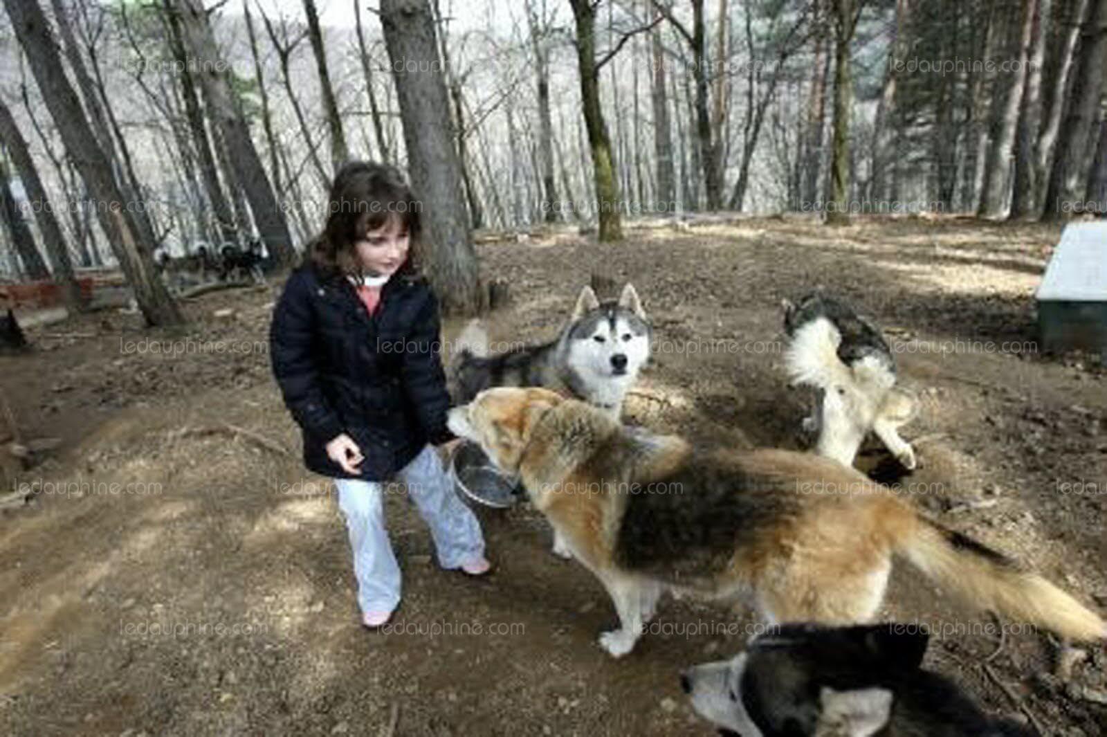 refuge chien valence