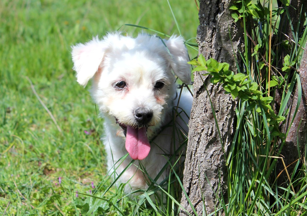 refuge chien valensole