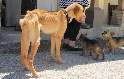 refuge chien villevaude