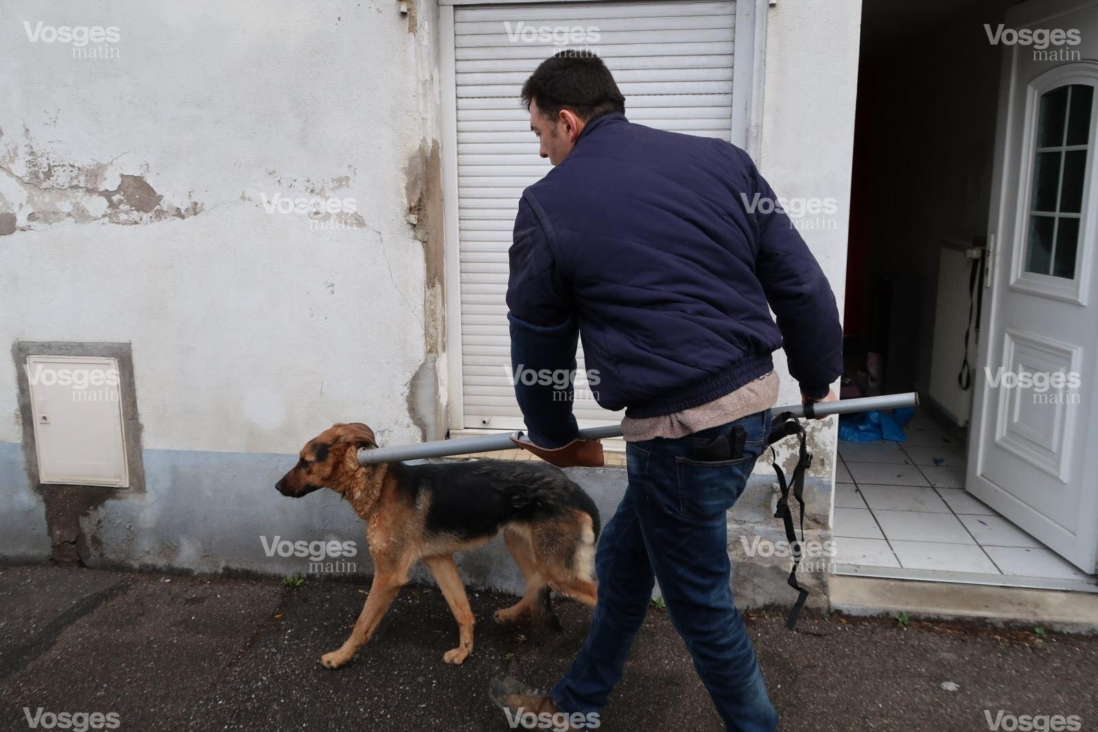 refuge chien vosges
