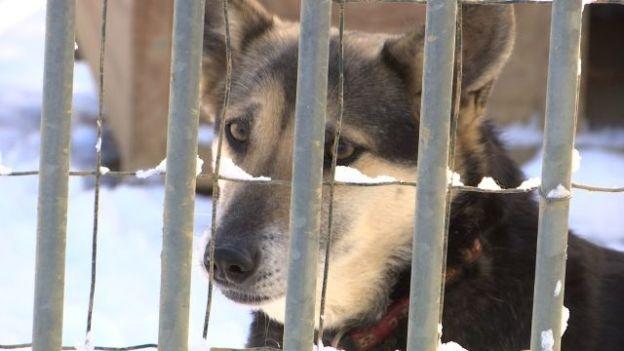 refuge chien waimes
