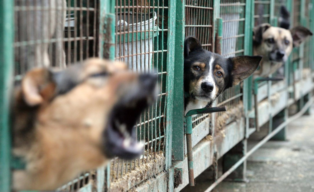 refuge chien wallonie
