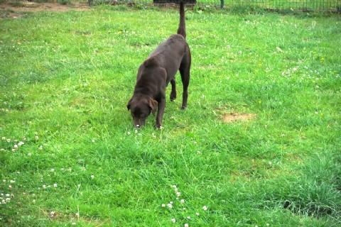 refuge chien waterloo