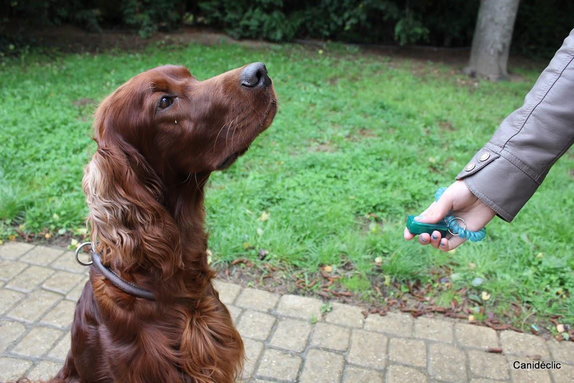 refuge chien wavre