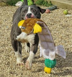 refuge chien west island