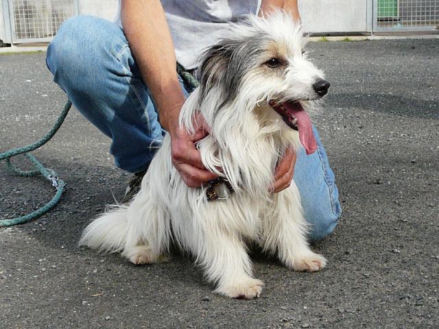 refuge chien yonne