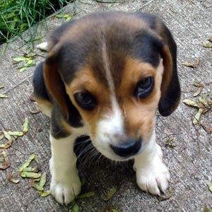 refuge chien yverdon