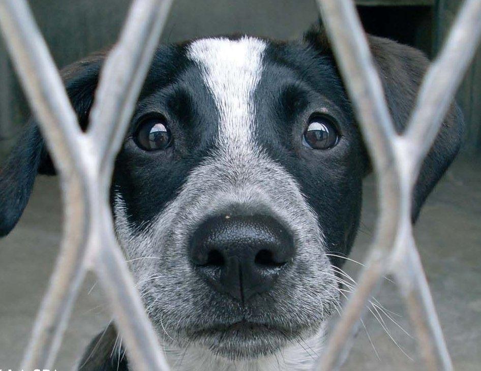 refuge chien
